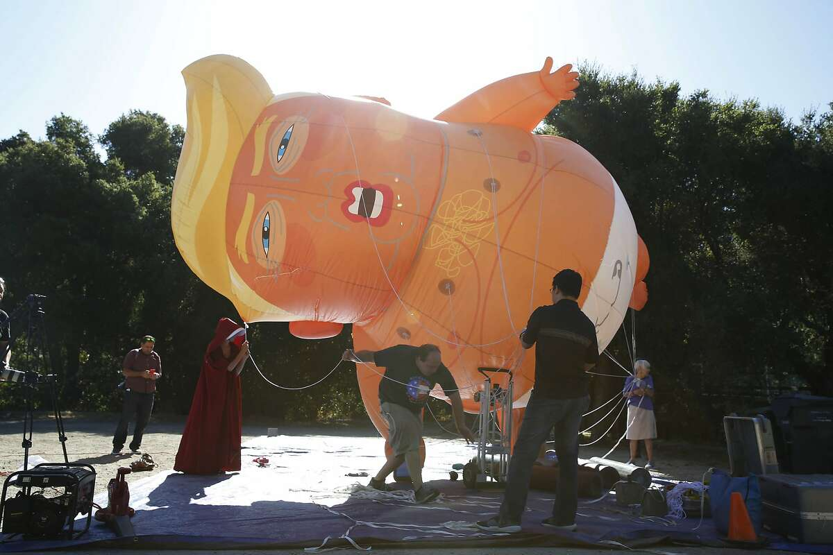 A Trump baby balloon is prepared to displayed in the air by President Trump protesters on Tuesday, September 17, 2019 in Portola Valley, CA.