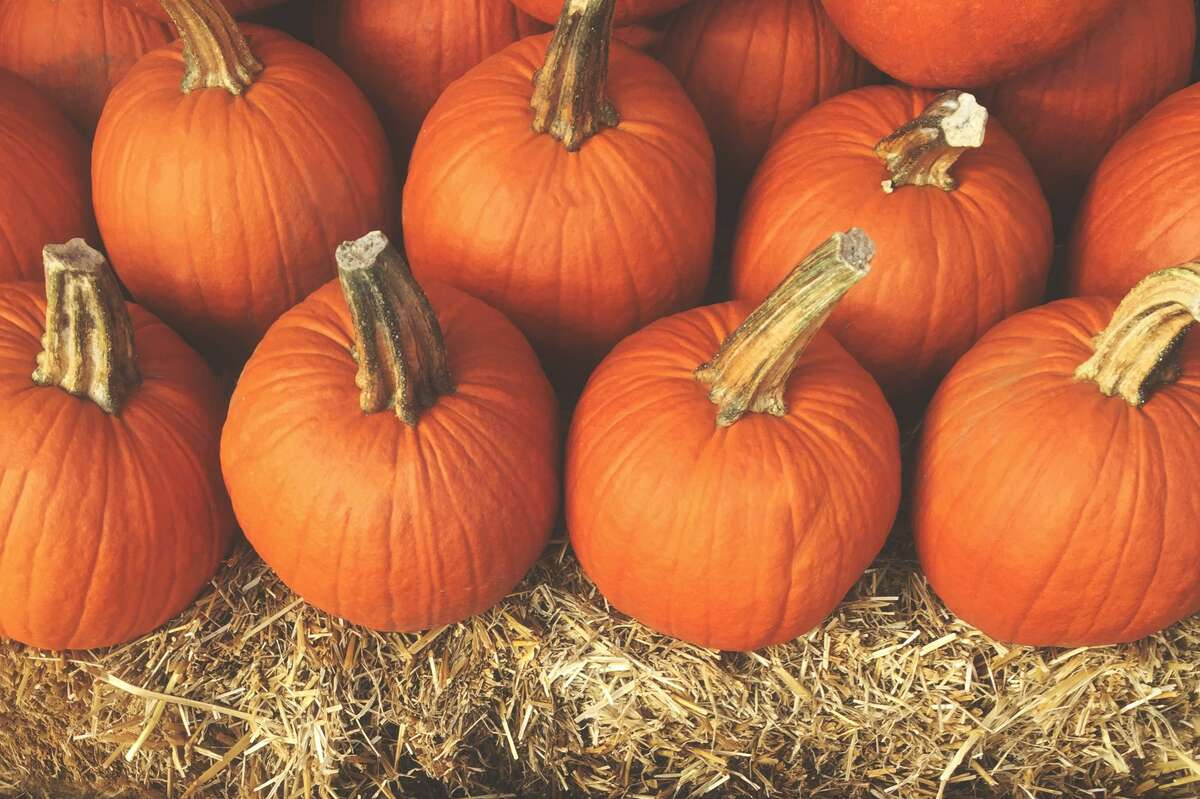 Pile of Pumpkins with Hay is a welcome sight at any pumpkin patch. Pick yours, and pick up a snack and adopt a puppy at this year's Pumpkins N' Puppies adoption event in Seguin.
