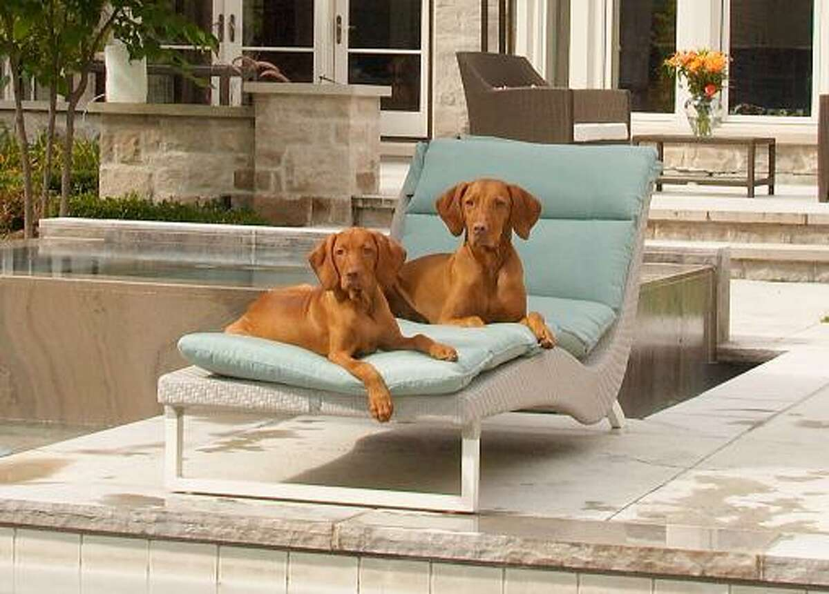 Kings of the castle: Stylish indoor and outdoor pet beds, like this one, available through the Pet Pantry Warehouse, with locations in Fairfield, New Canaan, Wilton, and Riverside, bring together the performance of Sunbrella outdoor fabrics with functional elegant designs. These breathable fabrics have superior UV fade resistant hours and are also mold, mildew, and stain resistant.