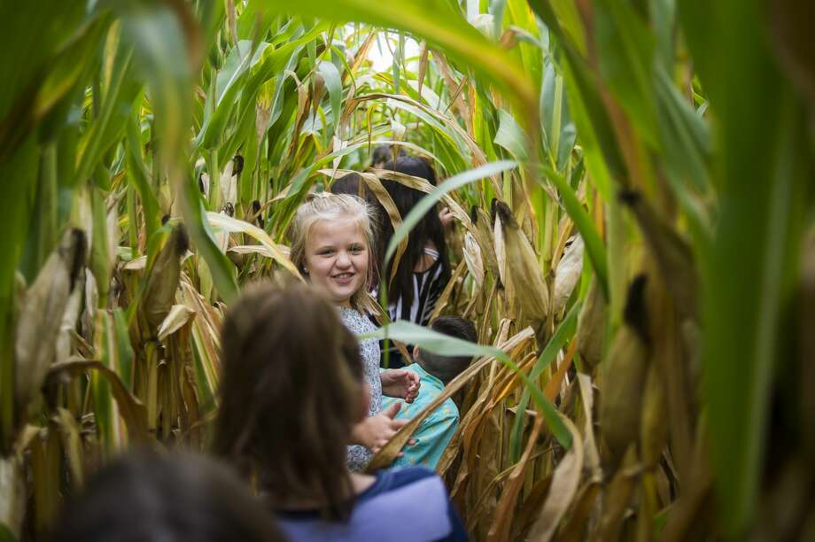 Josie Wolgast, a 4th grader at St. Peter Lutheran School in Hemlock, walks through rows of corn with classmates during a field trip Tuesday, Sept. 17, 2019 to the Laurenz family farm in Wheeler. The family hosts local 4th graders to teach them about farming each year. (Katy Kildee/kkildee@mdn.net) Photo: (Katy Kildee/kkildee@mdn.net)