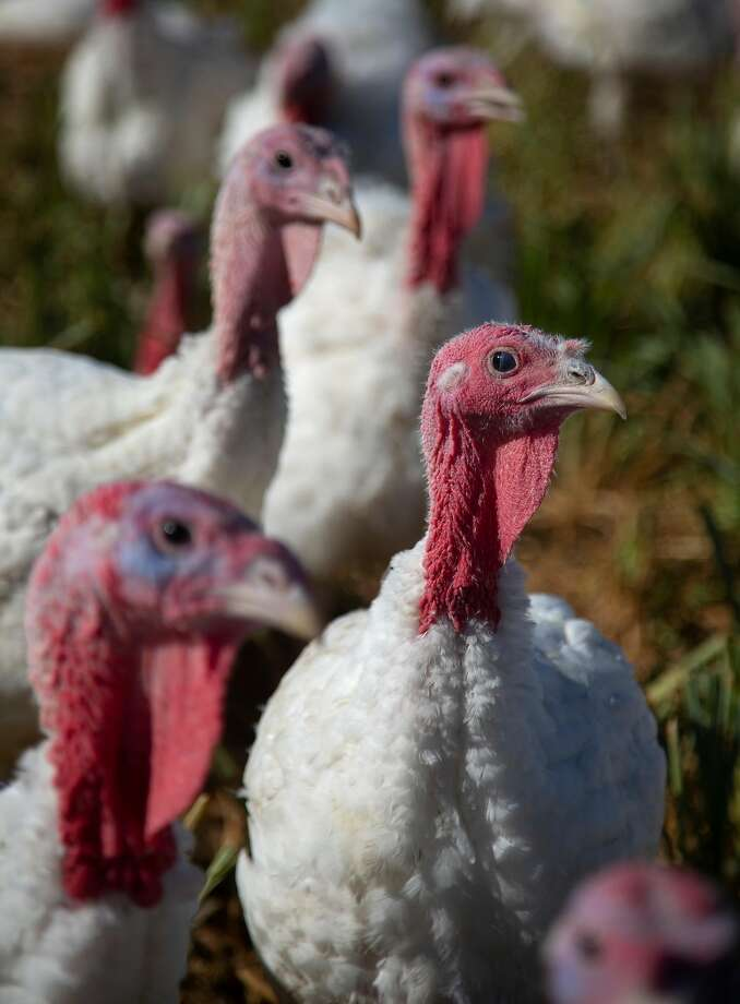 >>Here's what you need to know before you head out for your Thanksgiving plans Photo: Patrick Tehan / Special To The Chronicle