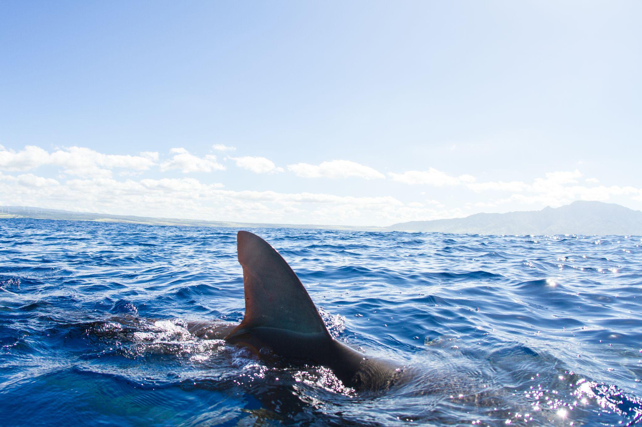 Snorkelers caught in rare shark 'feeding frenzy'...