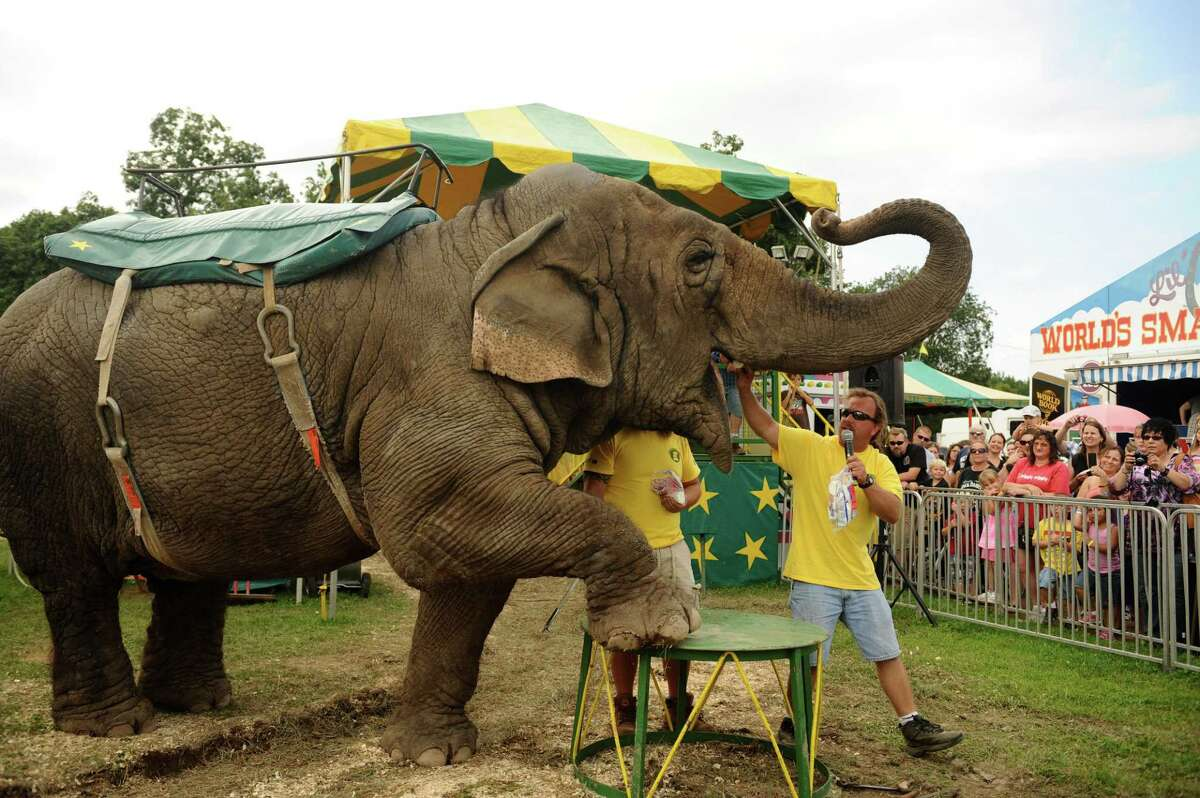 Tim Commerford feeds his elephant Beulah a marsh mellow while introducing him to fair goers. Beulah and Commerford, of R.W. Commerford & Sons, have been mainstays on the midway at the New Jersey State Fair in Augusta for several years. On Sunday, Aug. 11, 2013 the final day of this year's fair, Commerford and the fair celebrated Beulah's 44th birthday with fairgoers. (AP Photo/The Record, Tyson Trish)