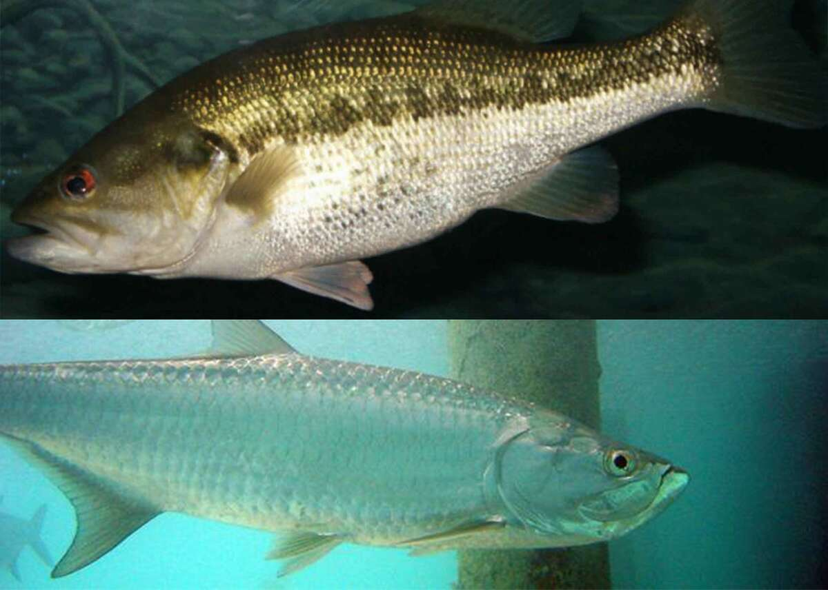 Answer: Alabama Answers: Largemouth bass (freshwater), fighting tarpon (saltwater) This slideshow was first published on Stacker