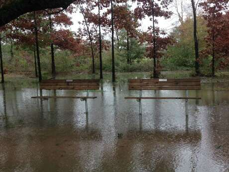 Standing water left by heavy rains can stress the root system of trees.