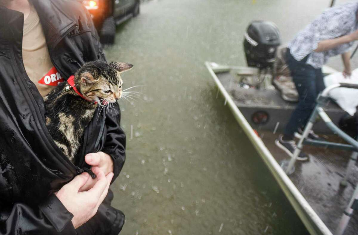 Levi Kelley's cat, named Cat, meows as Kelley shelters him from the rain with his jacket. The two were rescued from their RV after water trapped them in it in Vidor, Texas Thursday afternoon. Photo taken on Thursday, 09/19/19. Ryan Welch/The Enterprise