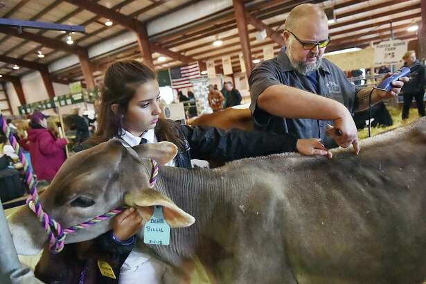 At the 2018 fair, Bill Boothe helps Woodstock Valley resident Kara-Lynn Hebert, 13, a member of the Rock Maple 4H prepare her 6-month-old brown swiss Billie for the dairy cattle showmanship competition.
