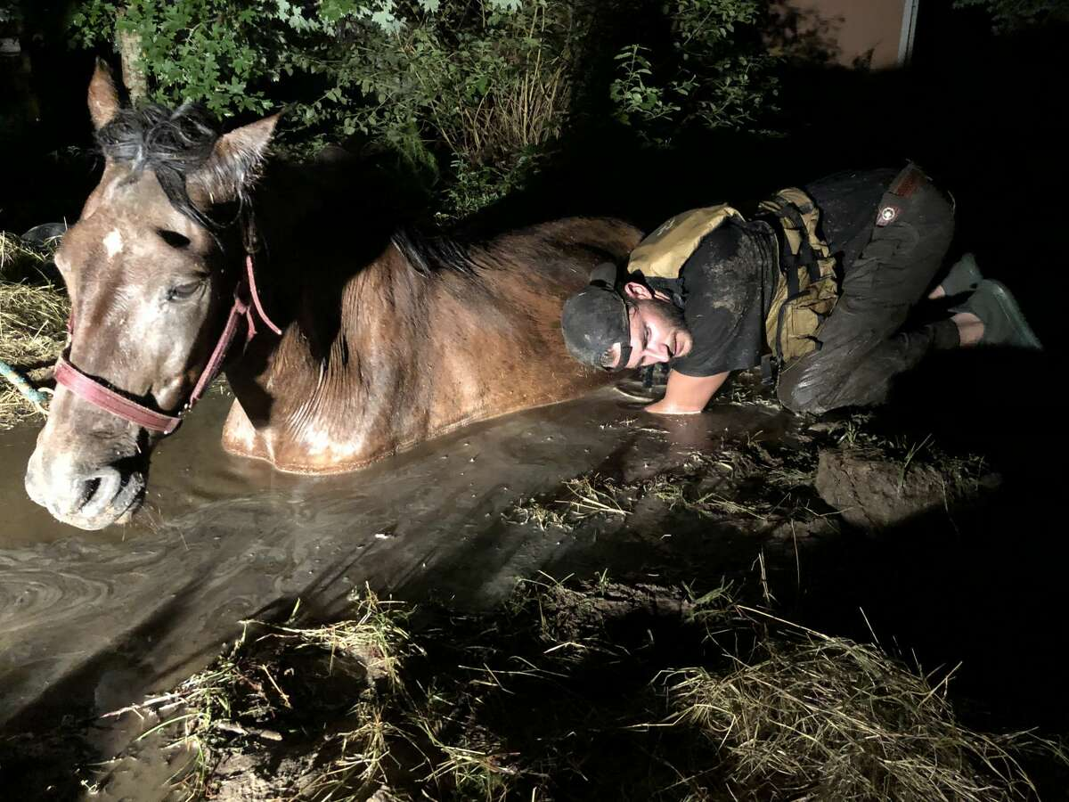 Volunteers from 3P Search & Rescue dig out a horse that had been trapped in the mud from Tropical Storm Imelda flooding in Splendora, Texas on Thursday, Sept. 19, 2019.