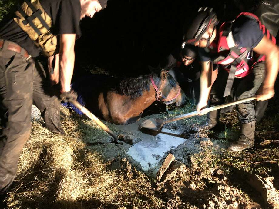 Volunteers from 3P Search & Rescue dig out a horse that had been trapped in the mud from Tropical Storm Imelda flooding in Splendora, Texas on Thursday, Sept. 19, 2019. Photo: Josh James