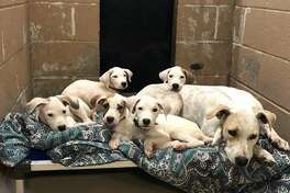 Dogs at Harris County Animal Shelter