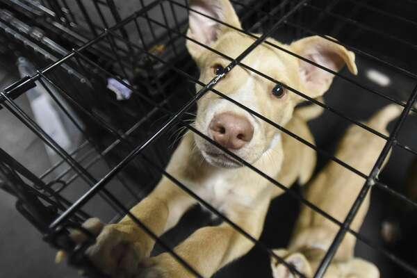 at the Beaumont Animal Shelter Sunday night. Photo taken on Sunday, 09/22/19. Ryan Welch/The Enterprise