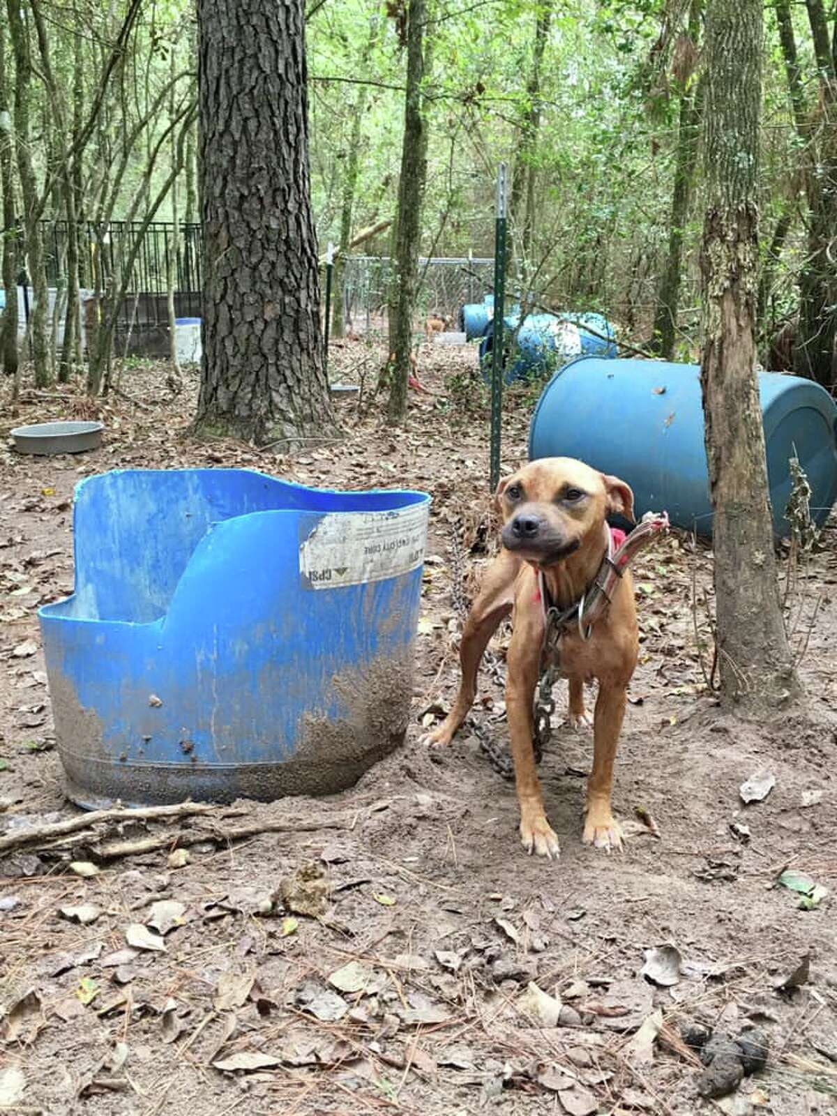"""Trash bins were found scattered among the site that rescuers said the dogs used for shelter. All of the dogs were malnourished with their rib cages visible and were """"infested with fleas and skin infections,"""" rescuers said."""