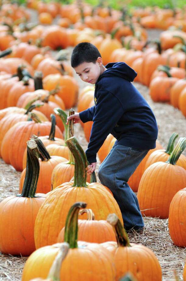 (Arnold Gold Ñ New Haven Register) Gianni Vazquez, 10, of Waterbury looks for a good pumpkin at Jones Family Farms' Pumpkinseed Hill Farm in Shelton on 10/7/2013.