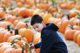 (Arnold Gold ?' New Haven Register) Gianni Vazquez, 10, of Waterbury looks for a good pumpkin at Jones Family Farms' Pumpkinseed Hill Farm in Shelton on 10/7/2013.