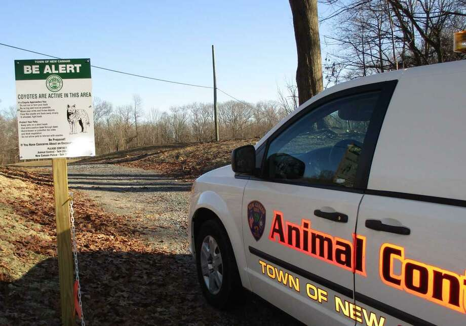 There is a report of a coyote in the Kiwanis Park area of New Canaan. New Canaan Animal Control put a sign up in the town's Waveny Park during a previous winter to warn residents about coyotes in the area. Photo: Contributed Photo / New Canaan News contributed