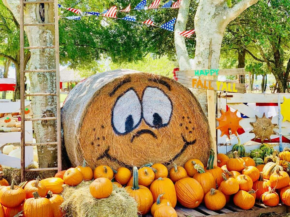 Blessington Farms Pumpkin Patch & Fall FestivalWhere: 510 Chisolm Trail, Wallis When: Saturday and Sunday in September and October. Saturday only Nov. 1 through Nov 9.Enjoy hay and barrel train rides, giant slides, a petting zoo, pedal cars and more at Blessington Farms in Wallis. Photo: Yelp/Sola S.