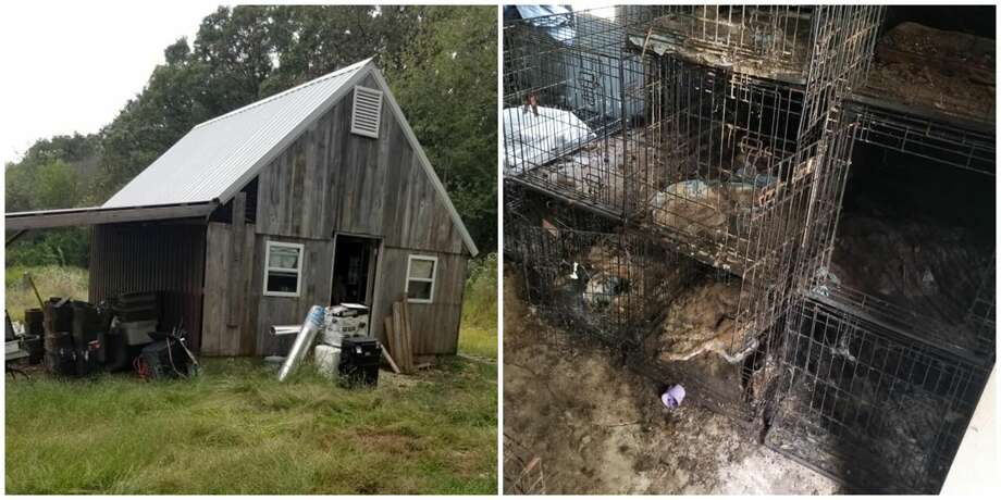 "Police found 38 dogs and one cat ""alive but in unimaginable condition"" in a old school bus, a barn and a house at a Cole Camp, Missouri property. Police later discovered approximately 120 dogs and one cat had died at that location.
