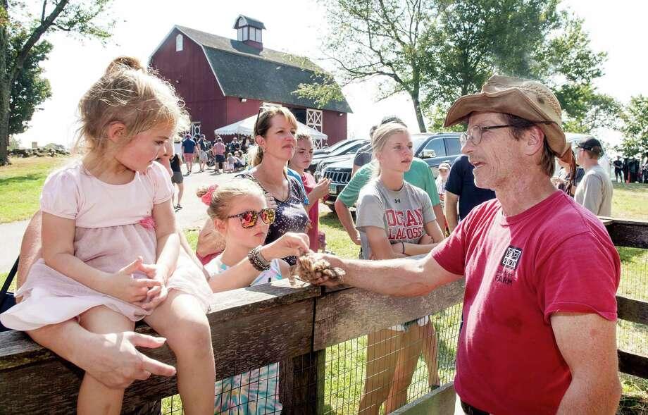 Ambler Farm program director Kevin Meehan shows visitors to last year's Ambler Farm Day wool from freshly sheared sheep. Photo: Bryan Haeffele / / Bryanhaeffele.com / Hearst Connecticut Media / BryanHaeffele