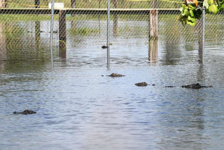 Gator Country after Tropical Depression Imelda inundated Southeast Texas with rain water. Gary Suarge, the company owner, said that Tropical Depression Imelda dropped a foot more water on the grounds than Tropical Storm Harvey. Photo taken Monday, 9/23/19 Photo: Guiseppe Barranco/The Enterprise, Photo Editor / Guiseppe Barranco ©
