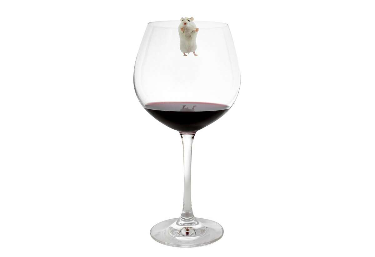 As much as 30% of the population may not be able to taste mouse - or mousiness, an off-flavor that can infect wines -�according to the Oxford Companion to Wine.