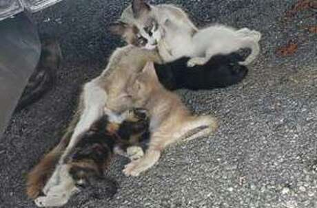 This was how rescuers found the momma cat and her babies.