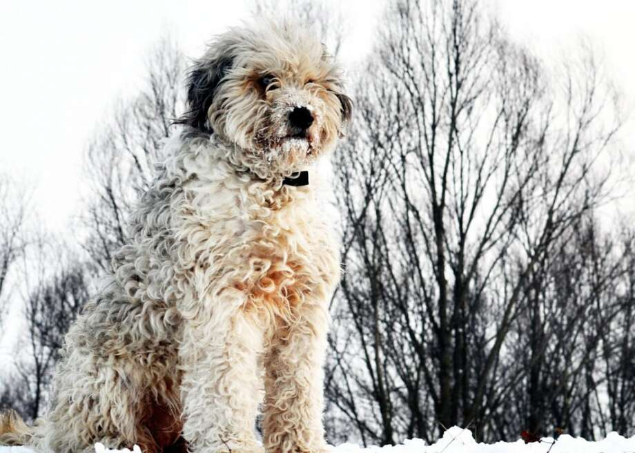 Easy Dog Breeds For First Time Owners The Middletown Press