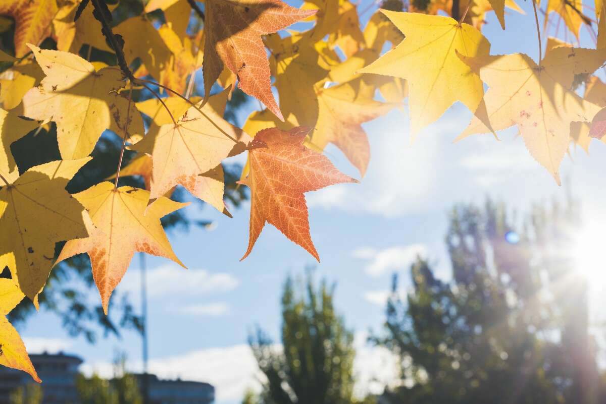 The weather, of courseLeaves changing color during the fall is not the norm for Houston, but the cold fronts are a much-welcomed reprieve from the overbearing heat.