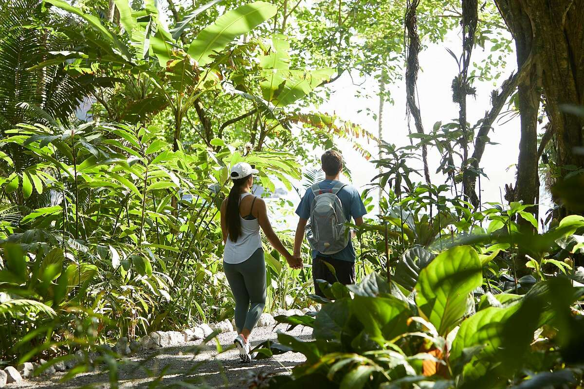 A couple walk through the Hawaii Tropical Botanical Gardens.