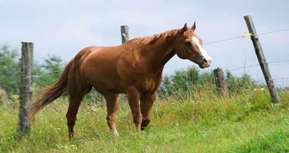 A horse is shown in this file photo