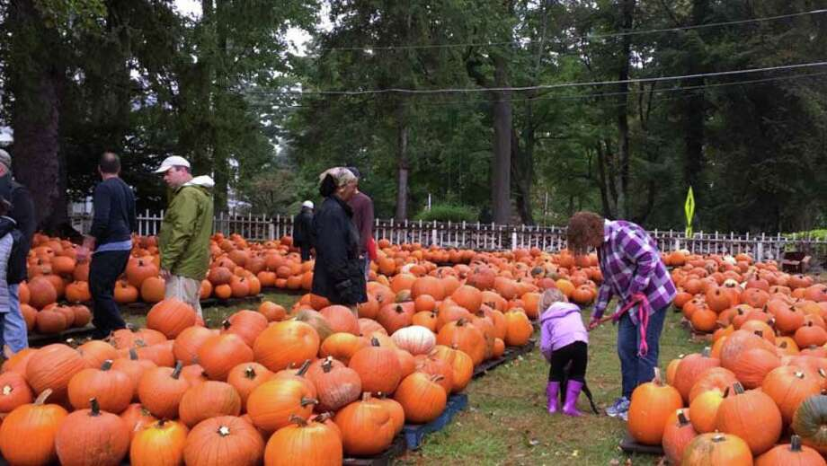 The pumpkin patch at Jesse Lee Church in Ridgefield draws in hundreds annually. Photo: /