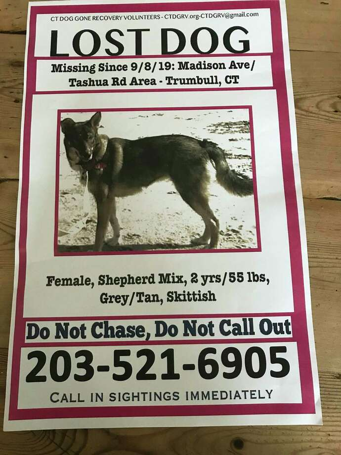 The female German Shepherd mix has been missing in Sept. 8, 2019. Photo: Contributed Photo