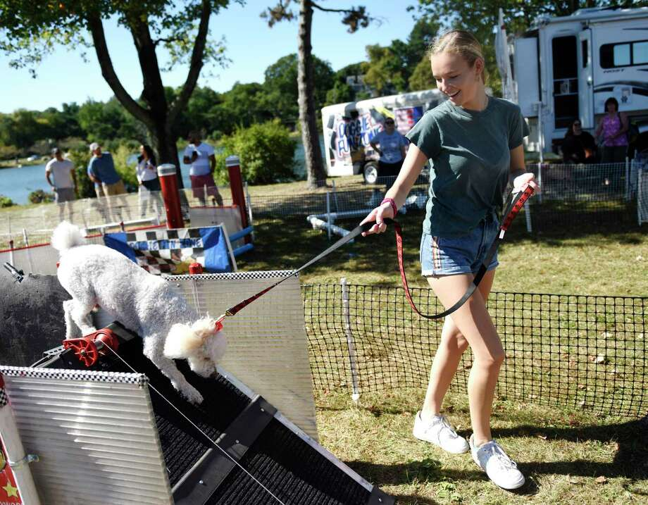 Greenwich's Isabella Dartnell, 17, walks her dog Teddy, a Cocker Spaniel and poodle mix, through the agility course at Adopt-A-Dog's annual Puttin' on the Dog fundraising event at Roger Sherman Baldwin Park in Greenwich, Conn. Sunday, Sept. 29, 2019. Hundreds of humans and their canine companions enjoyed dog demonstrations and competitions, pet vendors on display, children's activities, food trucks and more. Photo: Tyler Sizemore / Hearst Connecticut Media / Greenwich Time