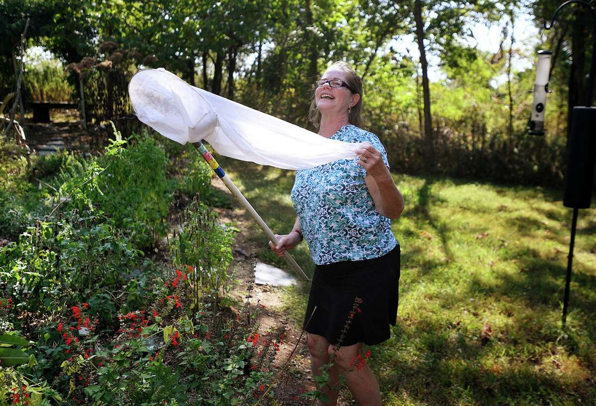 Teacher/naturalist Carol Kratzman, of Fairfield, nets Monarch butterflies for tagging at the Audubon Coastal Center in Milford, Conn. on Thursday, September 26, 2019 as part of the Monarch Watch tagging citizen science project. The tagged butterflies help scientists monitor the Monarch migration to breeding areas in Mexico.