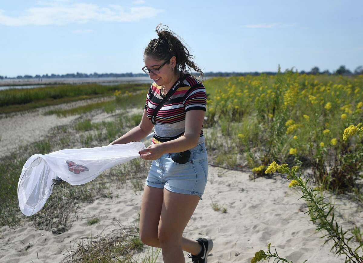 Melina Giantomidis, of Milford, nets a Monarch butterfly from the goldenrod covered dunes on Milford Point in Milford, Conn. on Thursday, September 26, 2019 as part of the Monarch Watch tagging citizen science project. The tagged butterflies help scientists monitor the Monarch migration to breeding areas in Mexico.
