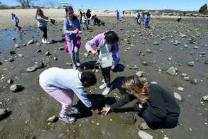Participants collect crabs species from the inlet near Holly Pond at Cove Island Park on Tuesday, April 16, 2019 in Stamford, Connecticut. Several young students took part in Science Stars, a STEM camp program for girls hosted by SoundWaters, that introduces students to the possibilities and potential of STEM education and careers.