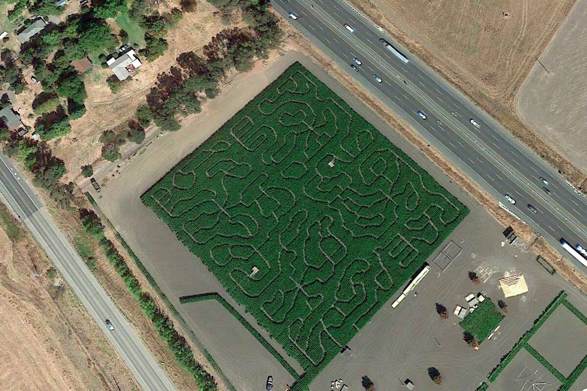 Police chased a suspect into the corn maze at the Petaluma Pumpkin Patch on Saturday morning and could not catch him for two hours.