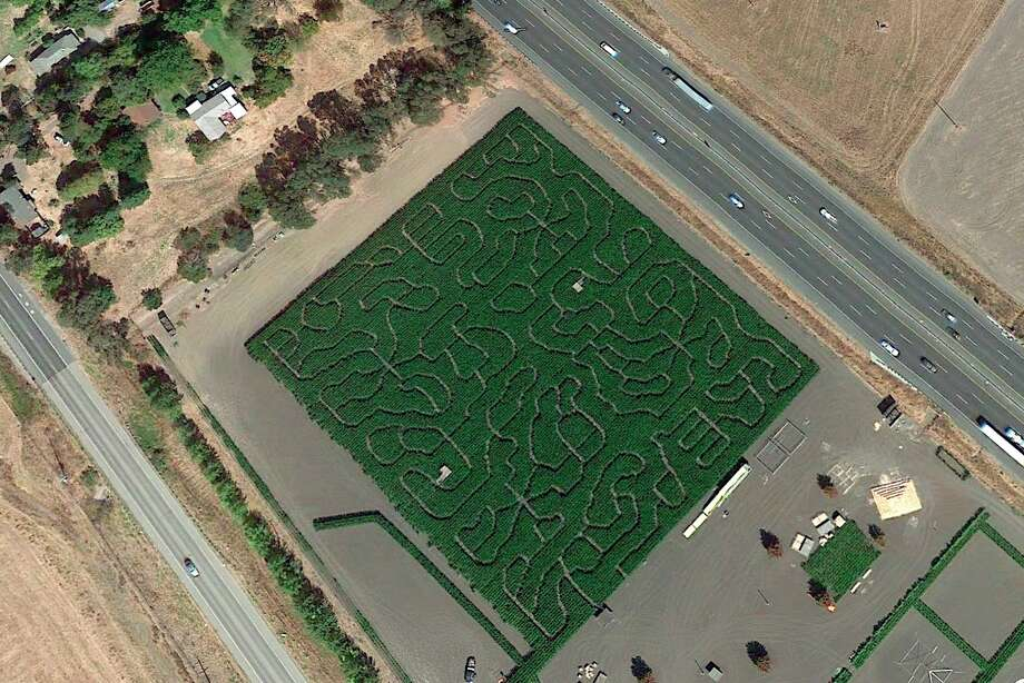 Police chased a suspect into the corn maze at the Petaluma Pumpkin Patch on Saturday morning and could not catch him for two hours. Photo: Google Earth