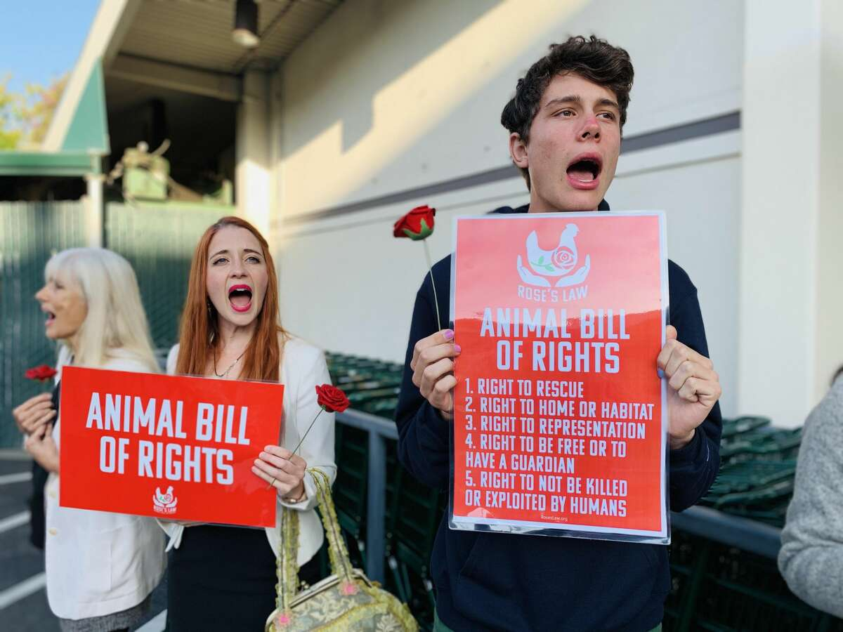 In a photo provided by Direct Action Everywhere,animal rights activists are shown at a Whole Foods store on 24th Street in San Francisco's Noe Valley.The protests are asking for a response from Amazon CEO Jeff Bezos regarding the undercover investigations the group claims have revealed cruel conditions at farms selling products marketed as