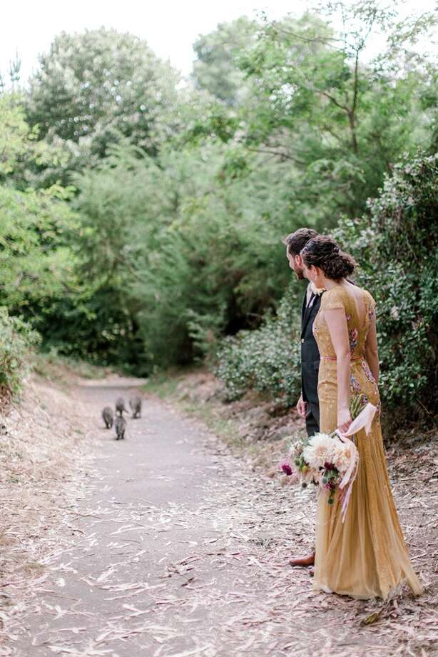 Family of raccoons photobomb couple's wedding shoot in Golden Gate Park