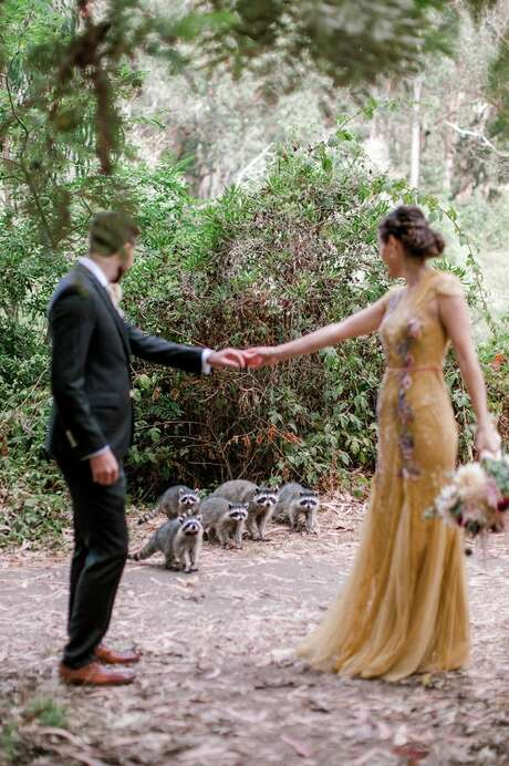 The couple's photoshoot was suddenly interrupted by a family of curious raccoons. Photo: Kathryn White Photography