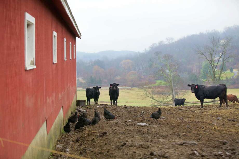 Animals at Happy Acres Farm in Sherman, Dec. 22, 2015. Photo: Trish Haldin / The News-Times Freelance