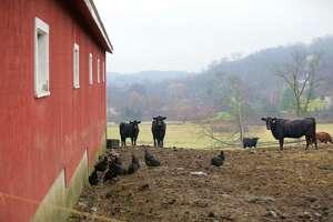 Animals at Happy Acres Farm in Sherman, Dec. 22, 2015.