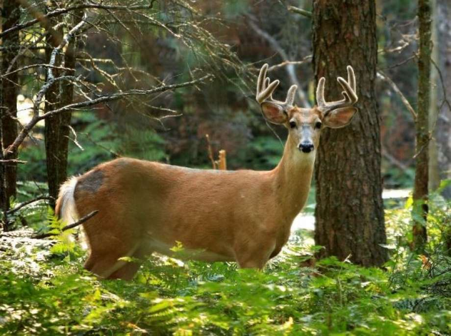 The Michigan Department of Natural Resources would like to remind Michigan residents of rules and regulations affecting archery season. Photo: Courtesy Photo