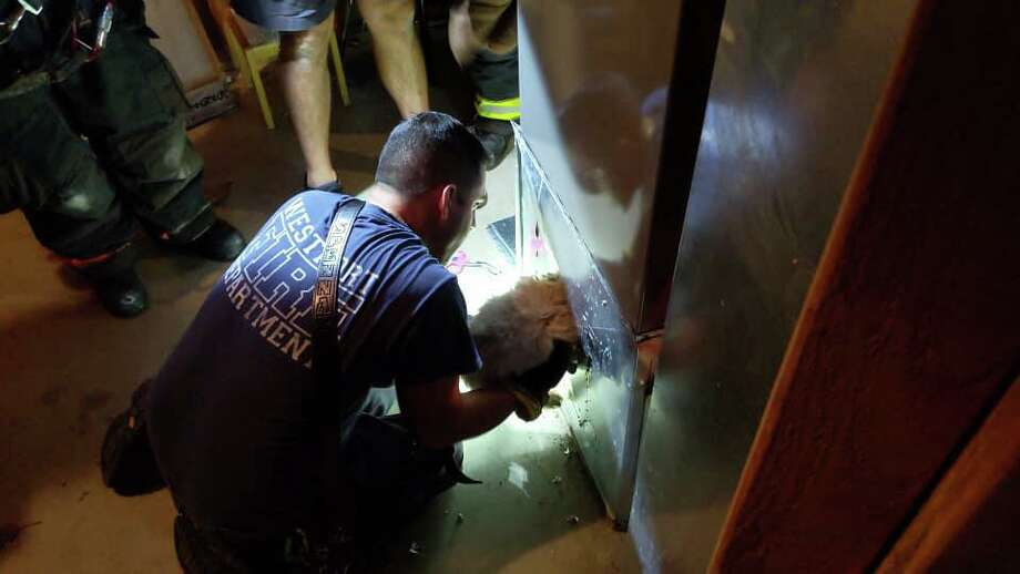 Westport firefighters rescued a dog stuck in the ducts of a home Monday. Photo: Westport Fire Department