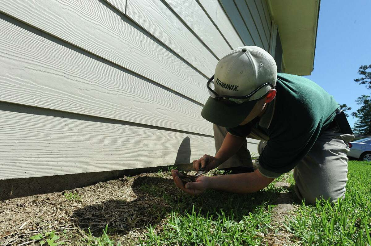 David Kibodeaux sifts through dirt searching for termites at a Beaumont home on Thursday, March 22, 2012.