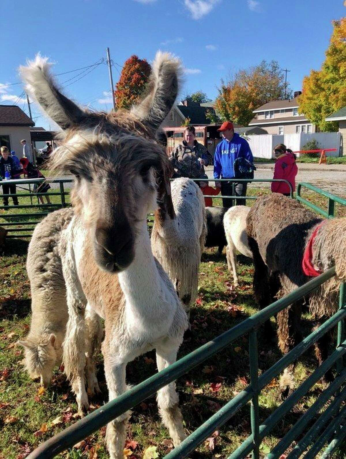 With a variety of animals, the MOSAC Petting Zoo will take place during the Evart Fall Festival. (Courtesy photo)