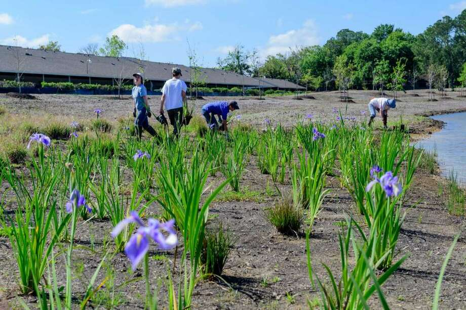 Volunteers plant irises at Exploration Green in Clear Lake, a water detention and nature area developed by Clear Lake City Water Authority and the nonprofit Exploration Green Conservancy. Some area residents say their community needs better representation than it gets being part of Houston's District E, which also includes Kingwood. Photo: Courtesy