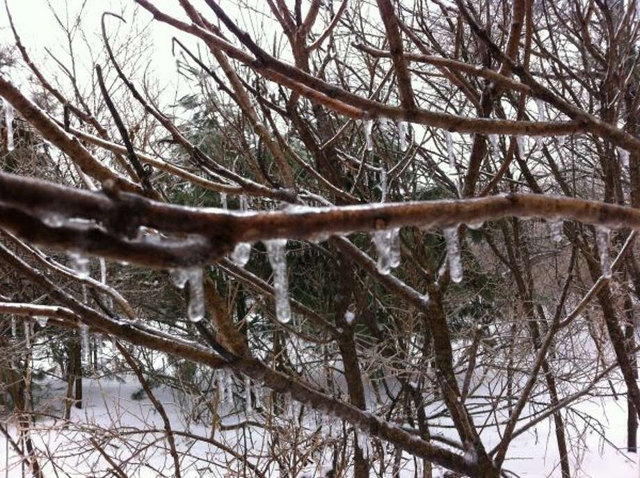 Freezing rain dripped off trees throughout the day on Friday as winter weather returned to the area. (Diana Six/Courtesy photo)