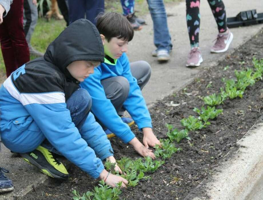 Petunia Parade Planted Onekama Community Comes Together For 26th