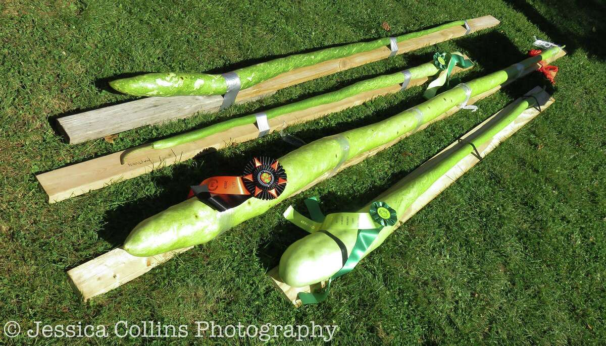 The long gourds.